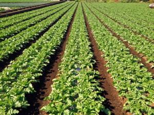 農地貸し出しの固定資産税半減