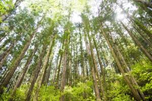静岡県 森林づくり県民税